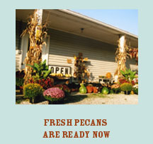 Pecans available all year round